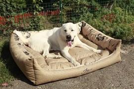Лежанка квадратная 100х80х21см JOY золотая для собак